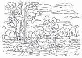 Coloring Forest Landscape Trees Template Colorare Bosque Painting Modello Stream Creek Het Colorear Voor Kleuren Malplaatje Pino Paesaggio Birch Colorir sketch template