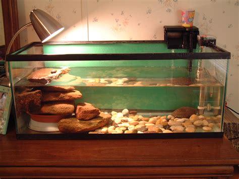 eared slider tank red eared slider res bouncing buns