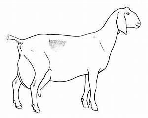 Nubian Goat Coloring Pages | www.imgkid.com - The Image ...