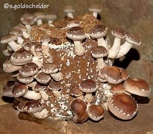 Wann Erntet Man Knoblauch : pilze selber anbauen im zimmer oder garten auf dem balkon ~ Lizthompson.info Haus und Dekorationen