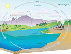 Short Notes On Carbon Cycle  Nitrogen Cycle And Sulphur