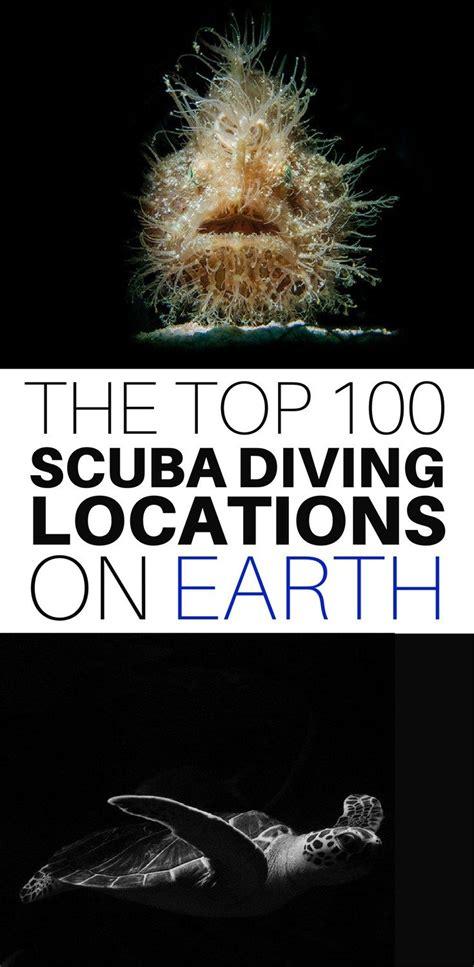 Best Dive Shop by Best 25 Dive Shop Ideas On Coffee Stores Near