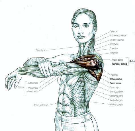 Learn vocabulary, terms and more with flashcards, games and other study tools. Stretching: How to Stretch the Shoulder - To increase flexibility to the shoulder and Improve ...