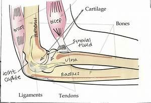 Bones Joints