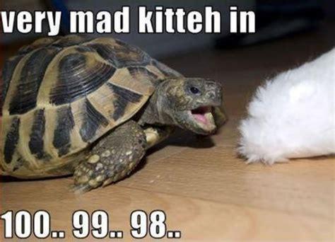 Funny Turtle Memes - ermahgerd kill the hydra