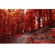 Nature Landscape Fall Path Forest Hill Trees Red