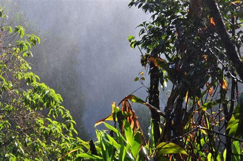 imagen de selva foto gratis