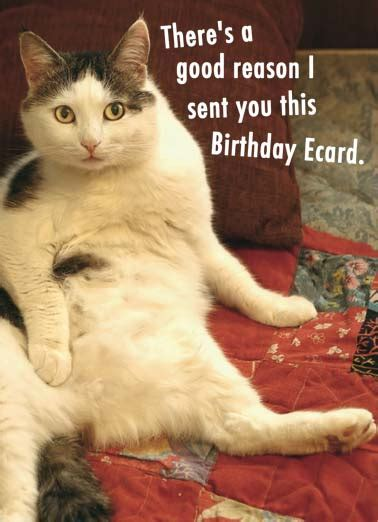 birthday ecards cats funny ecards  printout included