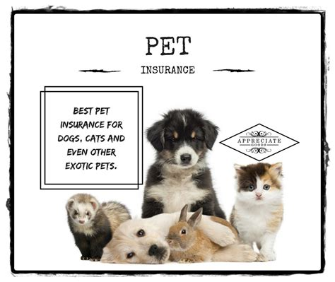 pet insurance  dogs cats   exotic pets