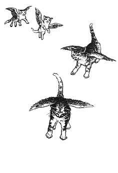I still believe catwings are real. Too perfect to be an idle fantasy. // Catwings by Ursula K