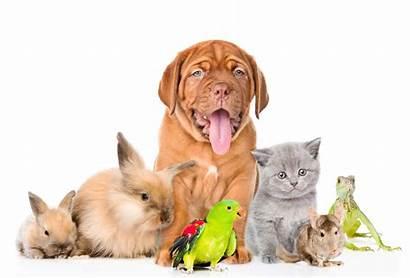 Pet National Celebrating Pets Fur Services