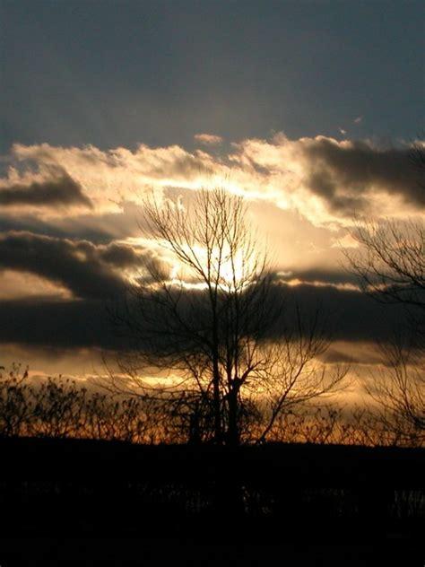 backlit tree storytellers