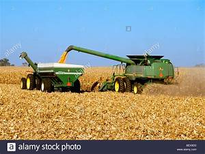 A John Deere Combine Harvests Grain Corn While Augering