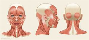 Jeff Searle  Muscles Of The Head And Neck