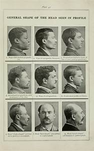209 Best Images About Phrenology  Physiognomy  Facial