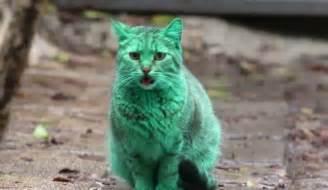 Bulgaria Green Cat