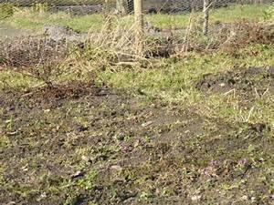 Erde Für Rasen : unkraut gem sebeet ~ Lizthompson.info Haus und Dekorationen
