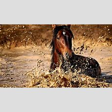Die 80+ Besten Schöne Pferde Hintergrundbilder