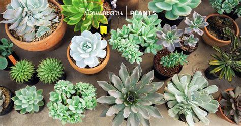 มาทำความรู้จัก ไม้อวบน้ำ (Succulent) กัน - บ้านและสวน