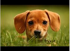 Lustige hunde videos zum totlachen Süße hunde filme #10