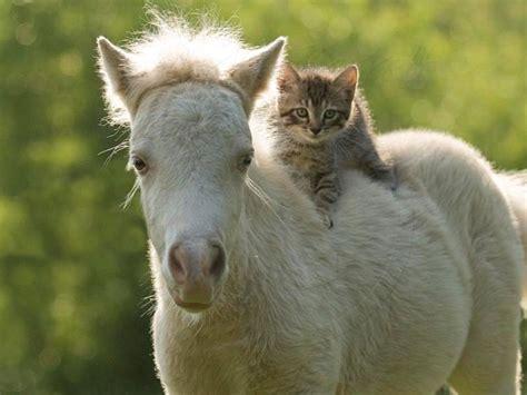 Gentlemen, Start Your Horses: Picking the 2013 Kentucky ...