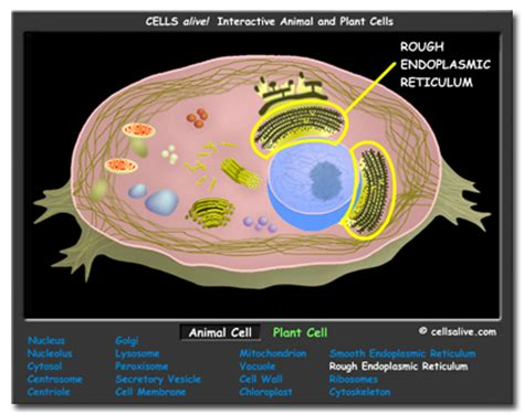 Organelle Who's Who Activity