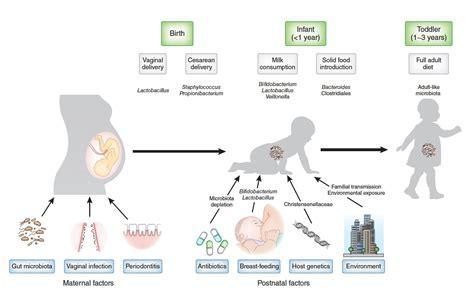 Custom Probiotics Human Microflora