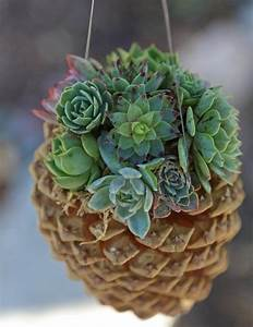 Sukkulenten Für Draußen : deko aus sukkulenten 80 tolle ideen f r drinnen drau en succulentes suspendu pot plante ~ Watch28wear.com Haus und Dekorationen