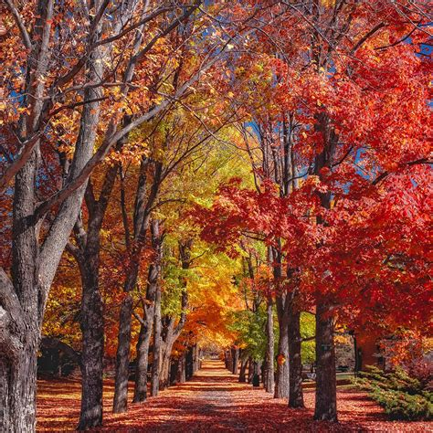 foliage of trees free images landscape nature forest path leaf fall walkway solitude foliage canopy