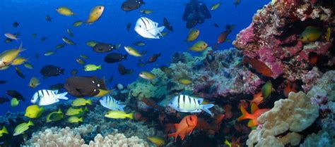 marine ecosystems  thousands  years  recover