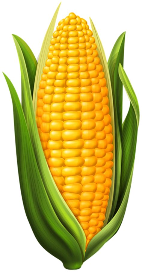 Corn PNG Clip Art Image | Gallery Yopriceville - High ...