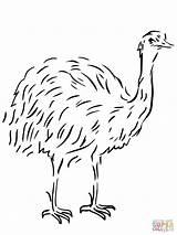 Emu Template Coloring Bird Flightless Australian Animal Pages Drawing Clipart Templates Printable Sheet Sketch Ausmalbild Vogel Birds Supercoloring Tiere Ausmalen sketch template