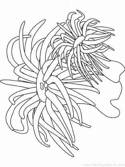 Coloring Pages Underwater Plants Ocean Scene Printable