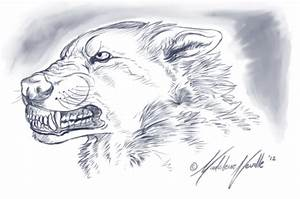 Snarling Wolf Sketch by Spectra-Sky on DeviantArt