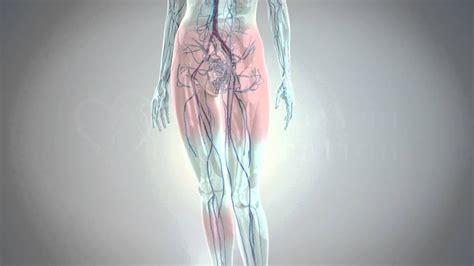 treatment  varicose veins spider veins pelvic