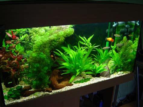 decantation aquarium eau douce 28 images decantation pratique 233 levage de crevettes