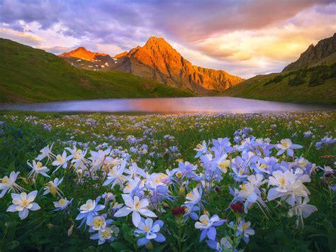 island lake colorado san juan mountains flowers meadow