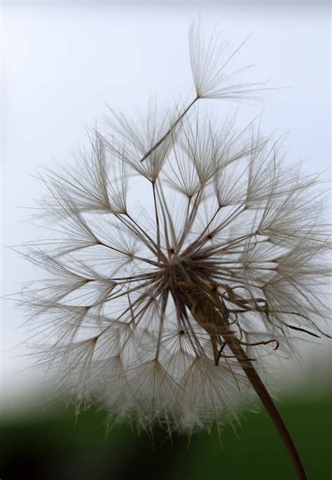 images tree nature branch dandelion leaf