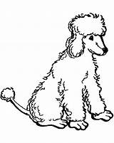 Poodle Coloring Pages Standard Printable Poodles Sheets Drawn Nova Getcolorings Library Clipart Clip sketch template