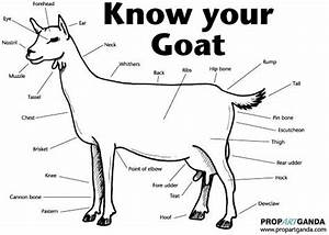 Dairy Goat Body Parts