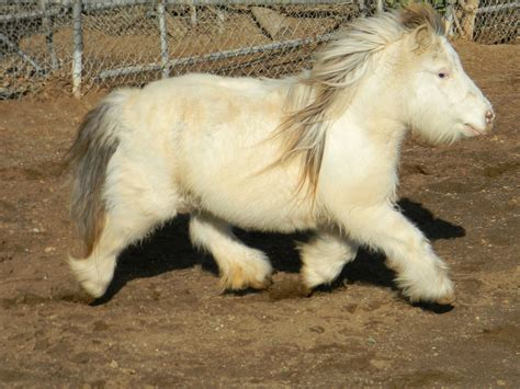 15 Mini Horses That Will Melt Your Heart