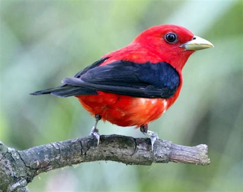 Top 10 Most Beautiful Birds In The World  Mill Door Makes