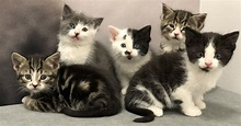 Kittens - Pet Paw-See