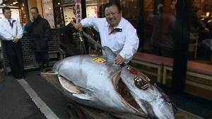Japan tuna is world's most expensive edible fish - BBC News