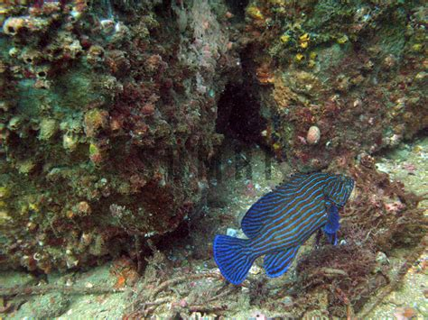 reef  fishes species survey