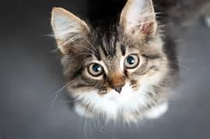 cat parasite new illuminati the strange link between parasites cats