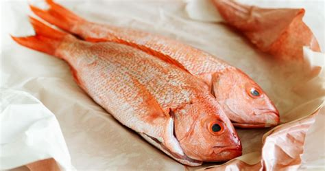 snapper eats nutrition livestrong fresh facts