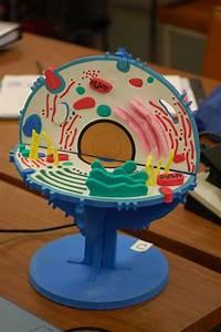 Cell Model Kit