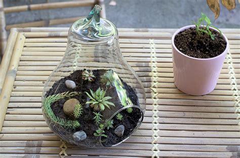 terrarium l fabriquer un terrarium pour l automne