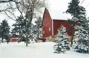 Twin Cities Christmas Tree Farm | Cut Your Own, Family Fun ...